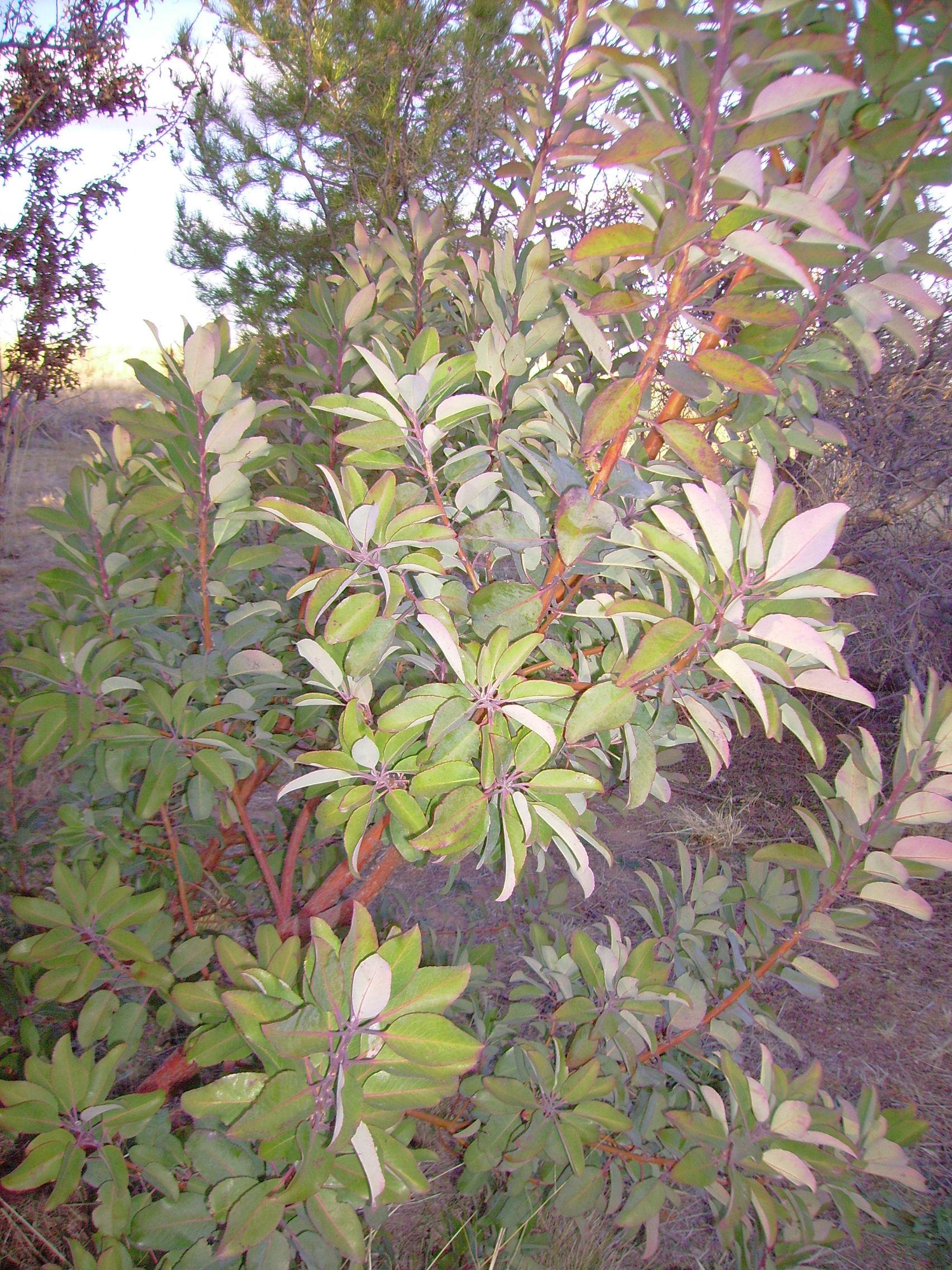 Native Plants Of Arizona And Texas